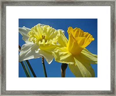 Blue Sky Twilight Spring Daffodils Flowers Framed Print by Baslee Troutman