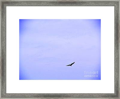 Blue Solo Flight Framed Print by Tina M Wenger