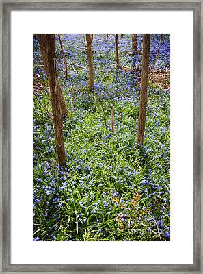 Blue Spring Flowers In Forest Framed Print by Elena Elisseeva