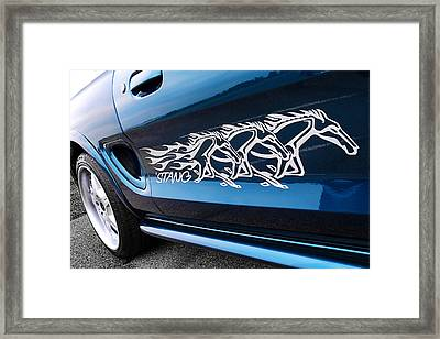 Blue Stang With White Ponies Framed Print by Gill Billington