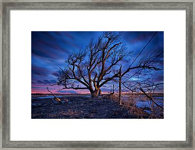 Blue Timber Framed Print by Thomas Zimmerman