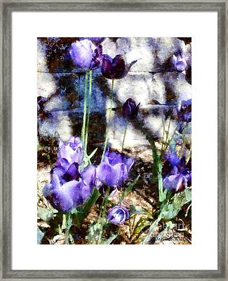 Blue Tulips In The Garden Framed Print by Janine Riley