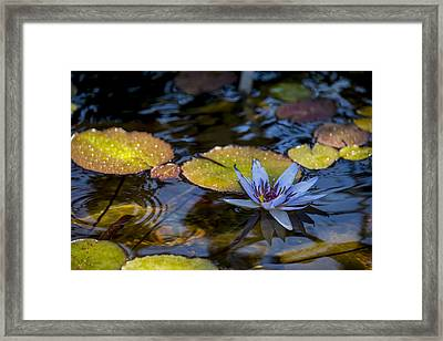 Blue Water Lily Pond Framed Print by Brian Harig