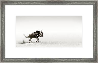 Blue Wildebeest In Desert Framed Print by Johan Swanepoel