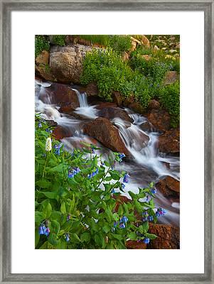 Bluebell Creek Framed Print by Darren  White