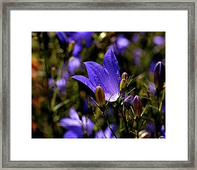 Bluebell Framed Print by Rona Black