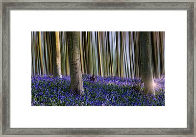 Bluebell Woodland Art Framed Print by Ian Hufton