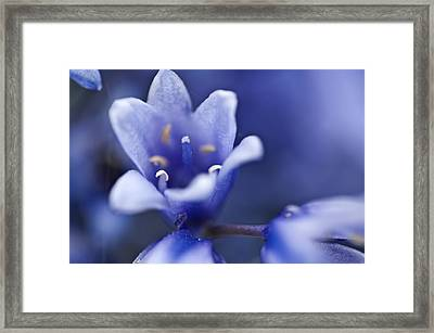 Bluebells 6 Framed Print by Steve Purnell