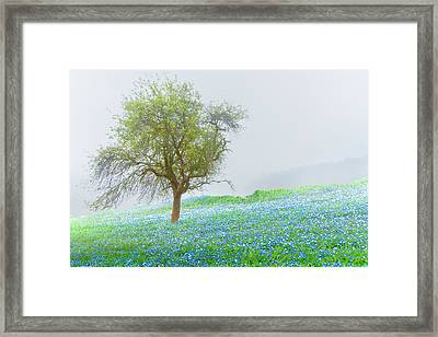Bluebells Framed Print by Debra and Dave Vanderlaan