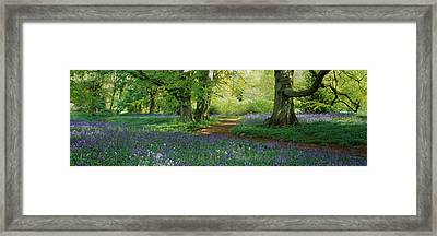 Bluebells In A Forest, Thorp Perrow Framed Print by Panoramic Images