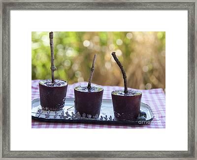 Blueberry Ice Pops Framed Print by Juli Scalzi