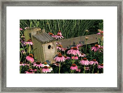 Bluebird Nest Box On Fence Near Purple Framed Print by Richard and Susan Day