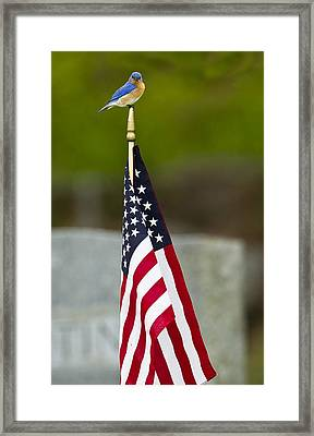 Bluebird Perched On American Flag Framed Print by John Vose