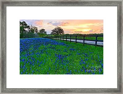 Bluebonnet Fields Forever Brenham Texas Framed Print by Silvio Ligutti