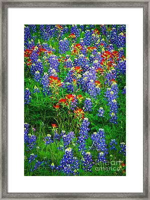 Bluebonnet Patch Framed Print by Inge Johnsson