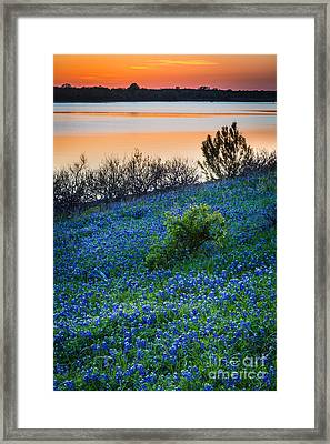 Grapevine Lake Bluebonnets Framed Print by Inge Johnsson