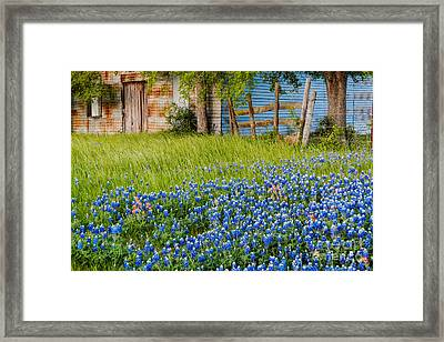 Bluebonnets Swaying Gently In The Wind - Brenham Texas Framed Print by Silvio Ligutti