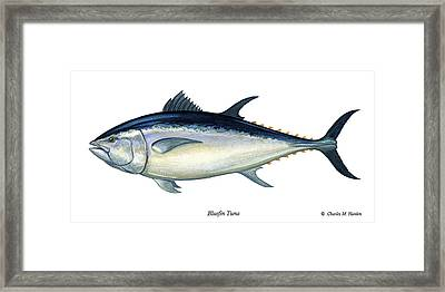 Bluefin Tuna Framed Print by Charles Harden