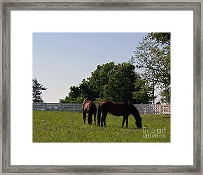 Bluegrass Summer Day Framed Print by Roger Potts