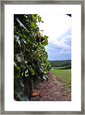 Blues From A Thundercloud Vineyard Framed Print by ARTography by Pamela Smale Williams