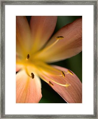 Bluete2 Framed Print by Antonio Castillo
