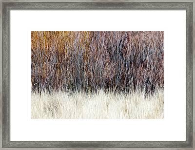 Blurred Brown Winter Woodland Background Framed Print by Elena Elisseeva