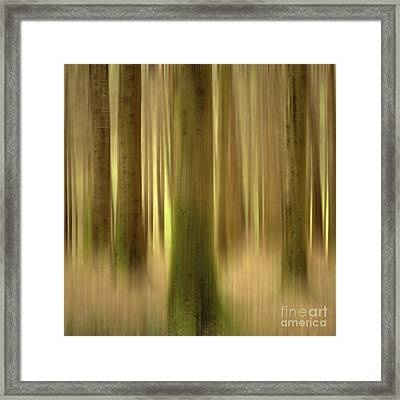 Blurred Trunks In A Forest Framed Print by Bernard Jaubert