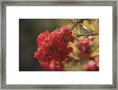 Blushing Berries Framed Print by Kandy Hurley
