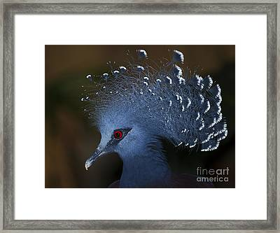 Blutiful.. Framed Print by Nina Stavlund