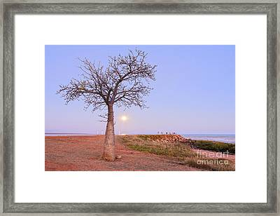 Boab Tree And Moonrise At Broome Western Australia Framed Print by Colin and Linda McKie