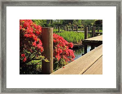 Boardwalk In Spring Framed Print by Scott Rackers
