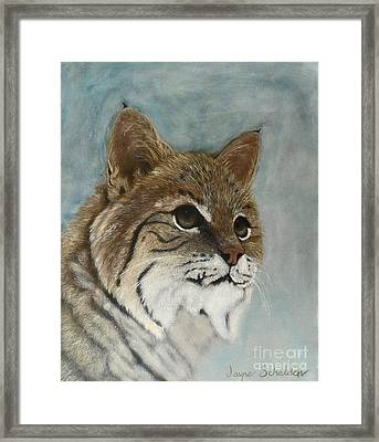 Bob Framed Print by Jayne Schelden