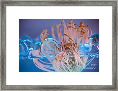 Boba Framed Print by Bobby Villapando