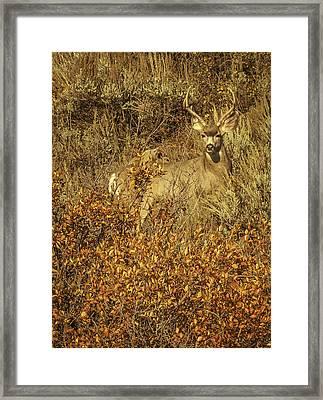 Bobby Buck Framed Print by Daniel Hebard