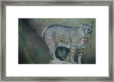 Bobcat And Baby Framed Print by Carmen Durden