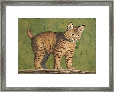 Bobcat Kitten Framed Print by Crista Forest