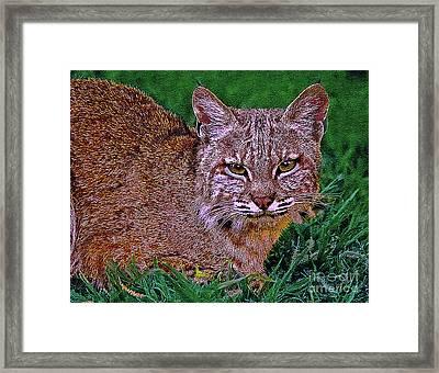 Bobcat Sedona Wilderness Framed Print by Bob and Nadine Johnston