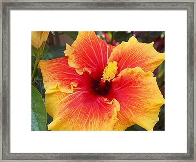Bold And Beautiful  Framed Print by Mindy Sue Werth