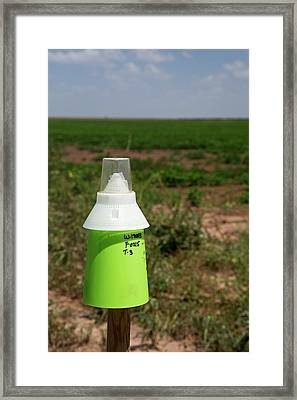 Boll Weevil Trap Framed Print by Jim West