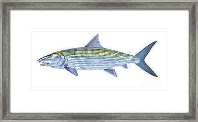 Bonefish Framed Print by Carey Chen