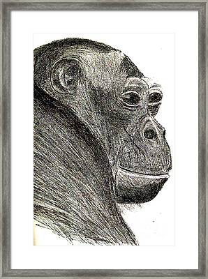 Bonobo Framed Print by Sandy McIntire