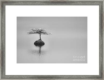 Bonsai At Fairy Lake Framed Print by Carrie Cole