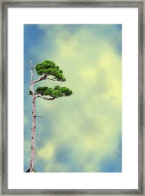 Bonsai Glow Framed Print by John Haldane