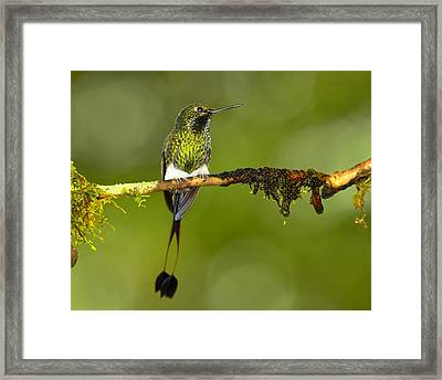 Bootstraps Framed Print by Tony Beck