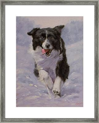 Border Collie Portrait II Framed Print by John Silver