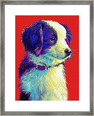 Border Collie Puppy Framed Print by Jane Schnetlage