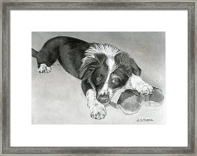 Border Collie Puppy Framed Print by Sarah Batalka