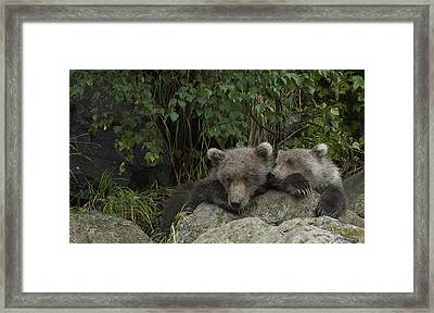 Bored Grizzly Pubs Framed Print by Andy-Kim Moeller