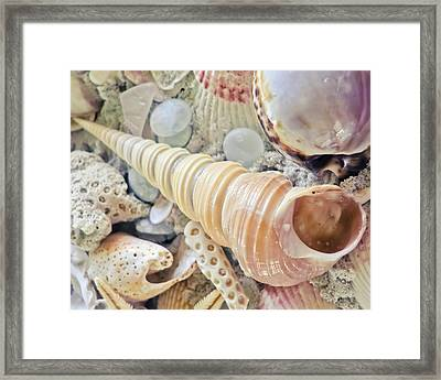 Boring Turret Shell Framed Print by Colleen Kammerer