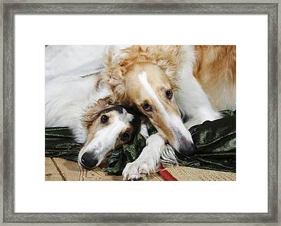 Borzoi Dogs In Love Framed Print by Christian Lagereek